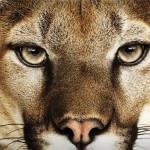 Llega la tercera Developer Preview de OS X Mountain Lion